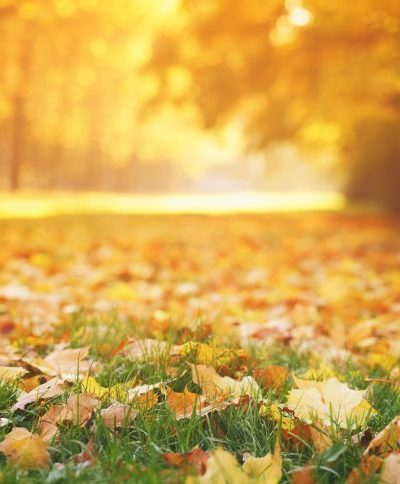 A Change of Seasons | Stephanie Drenka