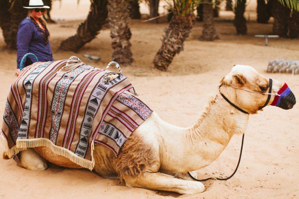 dubai-desert-arabian-adventures-7427