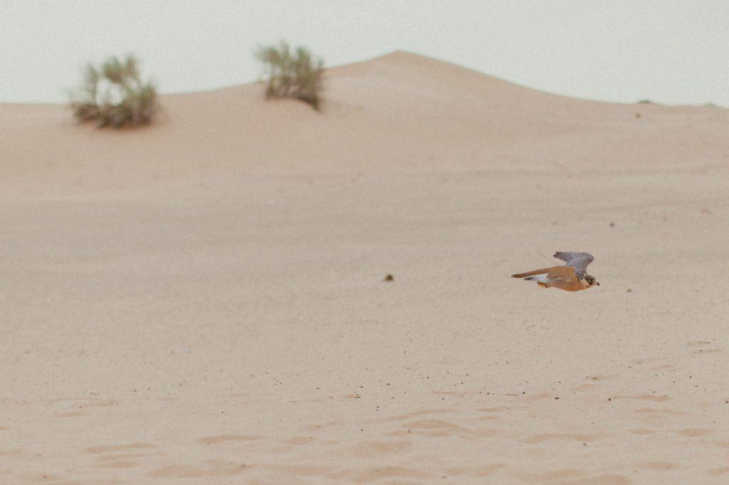 dubai-desert-arabian-adventures-7502