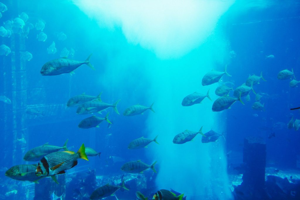 atlantis-the-palm-dubai-neptune-underwater-suite-8938