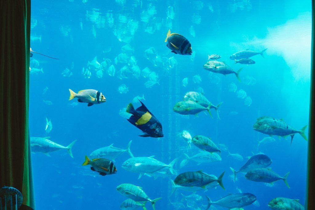 atlantis-the-palm-dubai-neptune-underwater-suite-8932