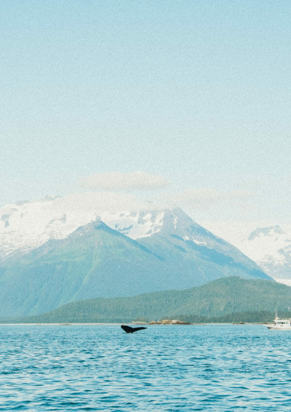 Whale Watching in Juneau with Harv & Marv's